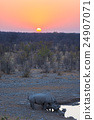 Rare Black Rhinos drinking from waterhole at sunset 24907071