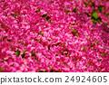花朵 花 花卉 24924605