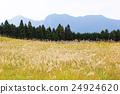 曾爾高原 風景 藍天 24924620