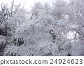 覆有霜的樹 冰霜覆蓋的樹木 霧凇 24924623