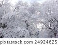 覆有霜的樹 冰霜覆蓋的樹木 霧凇 24924625