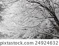 覆有霜的樹 冰霜覆蓋的樹木 霧凇 24924632