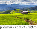 Green Terraced Rice Field in Pa Pong Pieng 24926975