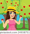 Woman Harvesting Apples 24938751
