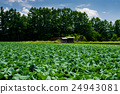 field, crops, agriculture 24943081