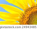 푸른 하늘에 빛나는 해바라기 꽃의 업 24943485
