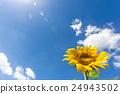 해바라기 꽃과 여름 하늘 24943502