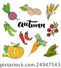 Autumn season set. Hand drawn doodles  24947543