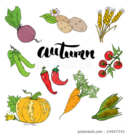 Autumn season set. Hand drawn doodles  24947543