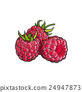 berry, raspberry, vector 24947873