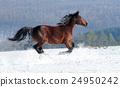 Horse 24950242