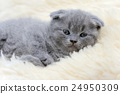 Kitten on white blanket 24950309