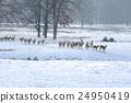 Deer 24950419