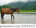 Horse 24950537