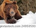 Bear 24950593