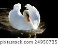 Swan 24950735