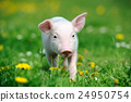 Young pig on a green grass 24950754