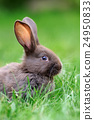 Rabbit in the grass 24950833