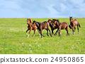 Horses 24950865