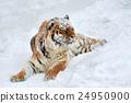 Tiger 24950900