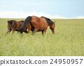 Horse 24950957