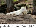 White wolf 24951023
