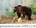 Bear 24951119