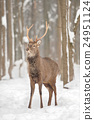 Deer 24951124