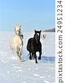 Horse 24951234