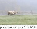 動物 農場 羊 24951239