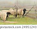 動物 農場 羊 24951243