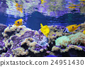 fish, underwater, coral 24951430