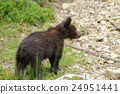 bear, animal, brown 24951441