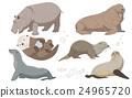 動物 多彩 河馬 24965720
