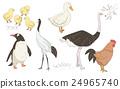 鳥兒 鳥 插圖 24965740