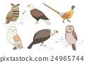 鳥兒 鳥 鷹 24965744