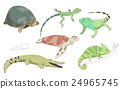 動物 鱷魚 鬣蜥蜴 24965745