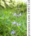 이 むらしき 색의 꽃은 키노 탐라 소우의 꽃 24967318