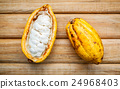 Ripe Indonesia's cocoa pod setup on rustic wooden 24968403