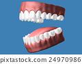 3D teeth close up. 24970986
