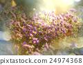 Flowers 24974368