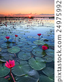 The sea of red lotus, Udon Thani, Thailand 24975992