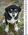 cute dog are looking 25000913