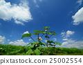 nature, natural, naturals 25002554