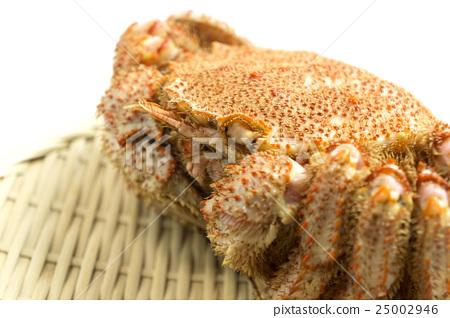 crab, crabs, hair crab 25002946