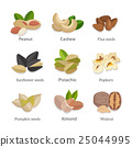 Set of seeds and nuts vector illustrations 25044995