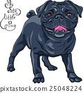 vector sketch cute dog black pug breed 25048224