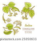 linden vector set 25050633