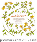 St.John's wort elements vector set 25051344