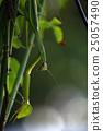 곤충, 앞발, 육식 25057490